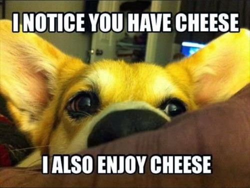 dog-loves-cheese